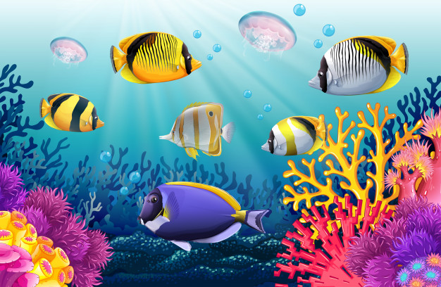 This image shows fish in an aquarium which looks they are in their natural habitat