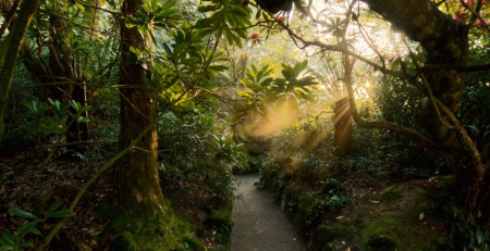 pathway in heligan