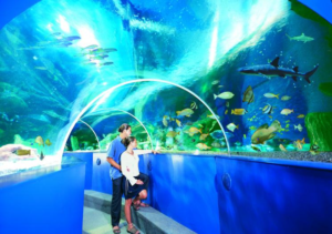 walk in aquarium at blue reef aquarium