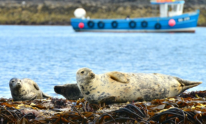 What Does St Ives Cornwall (UK) Have To Offer? Seal Island